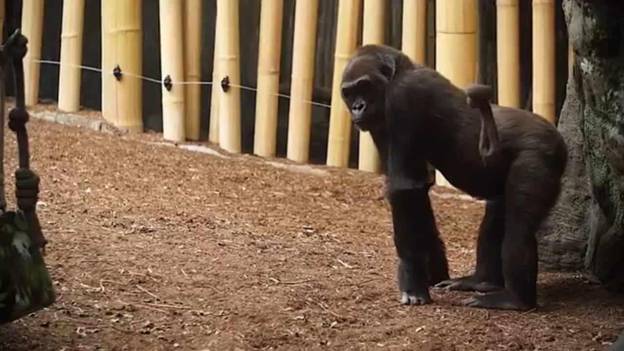 Microsoft Customer Story Toronto Zoo